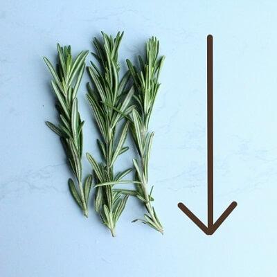 ローズマリーの葉の取り方5