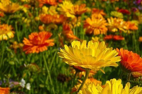 オレンジ色の花を使う