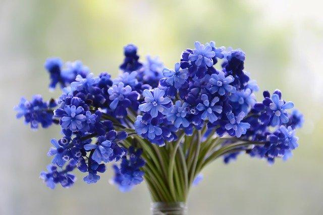余った茎と花はどうする?